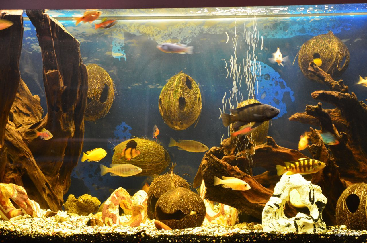 Изготовление гротов для аквариума