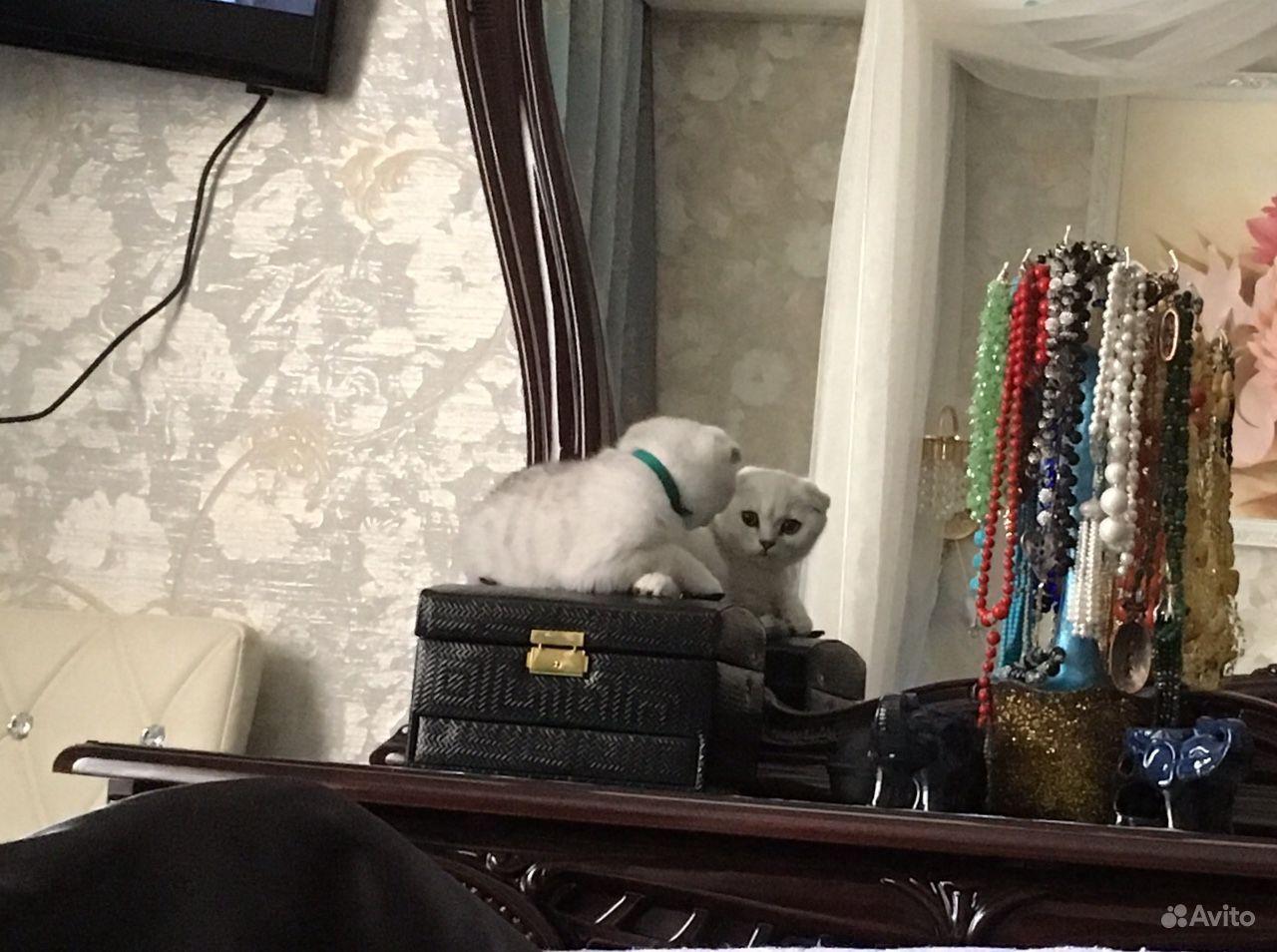 Продается Кошка - фотография № 8