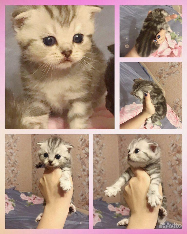 Породистые Котята (продажа) - фотография № 1
