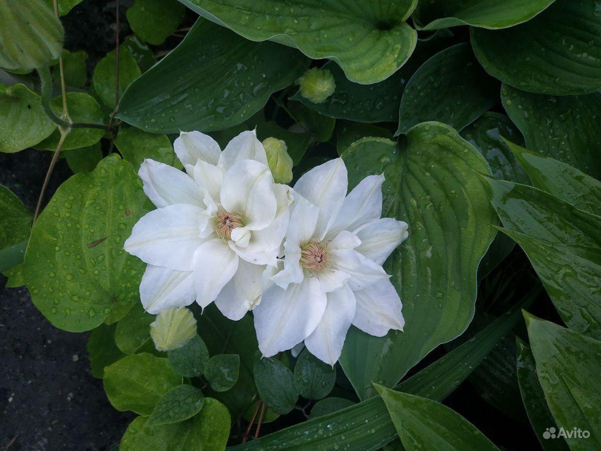 Цветы купить на Зозу.ру - фотография № 8