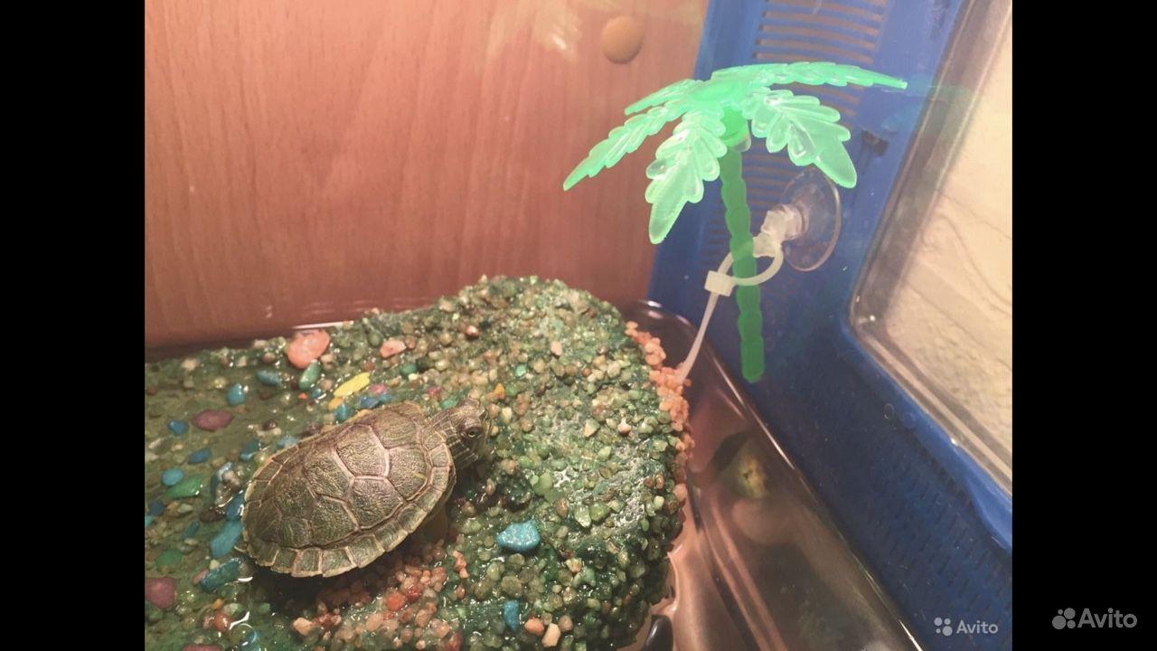 Островок в аквариум для черепахи купить на Зозу.ру - фотография № 1