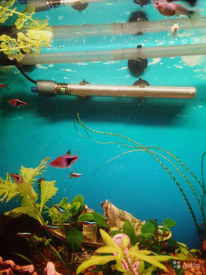 3 аквариума купить на Зозу.ру - фотография № 7
