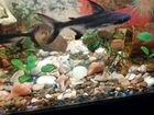 Аквариумный рыбки