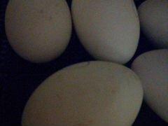 Гусинные яйцо