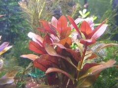 Аквариумные растения, креветки