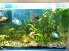 Продажа аквариума с рыбками