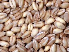 Пшеницу заберу