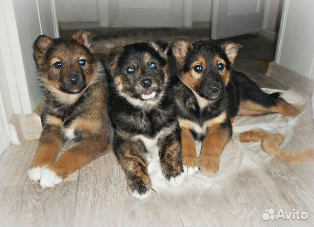 часто покупатели собаки щенки в дар на авито в улан-удэ экономьВ выборе