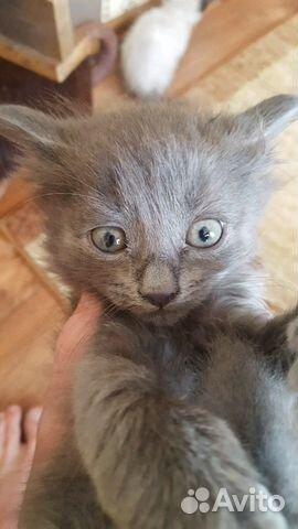скачать все котята на авито нефтеюганск жилье
