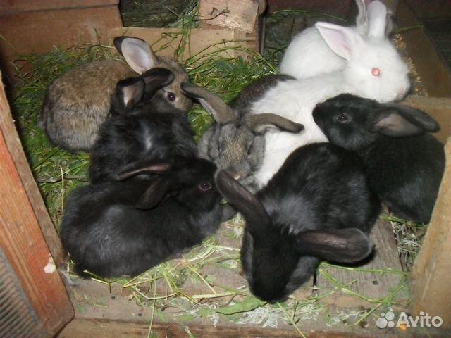 большой мешок кролики черно бурый в один месяца фото новогоднего