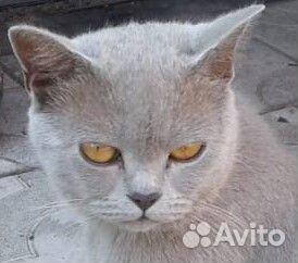 Отдам котенка 89230078502 купить 3