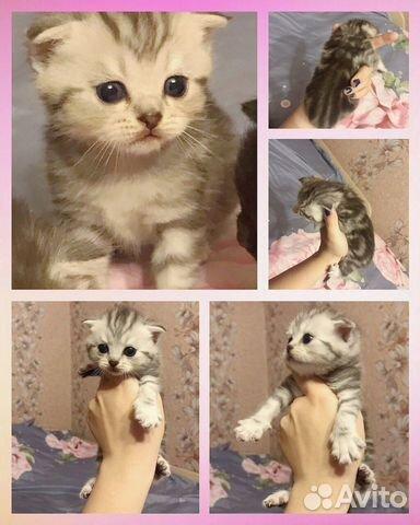 Породистые Котята (продажа)