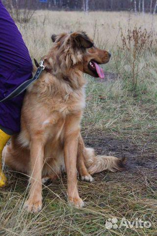Собака в добрые руки купить на Зозу.ру - фотография № 5