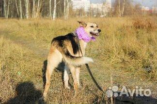 Необыкновенная собака в дар купить на Зозу.ру - фотография № 7