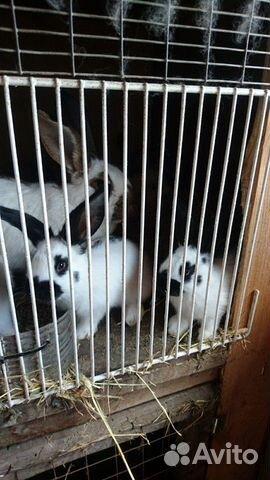 Кролик 89040816416 купить 2