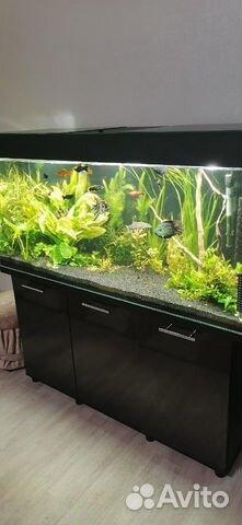 Украшение для аквариума 89649933848 купить 2