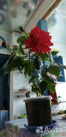 Комнатные растения  89512560859 купить 1