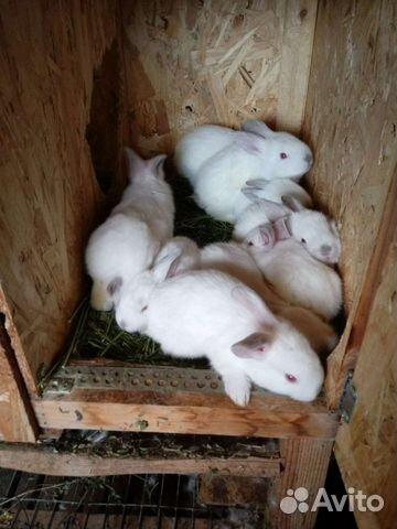 Кролик  89376707200 купить 6