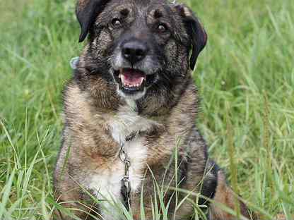Очаровательная собака Карамелька в добрые руки