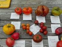 Семена и рассада томатов — Растения в Москве
