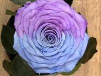 Стабилизированные бутоны роз