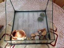 Черепахи вместе с террариумом