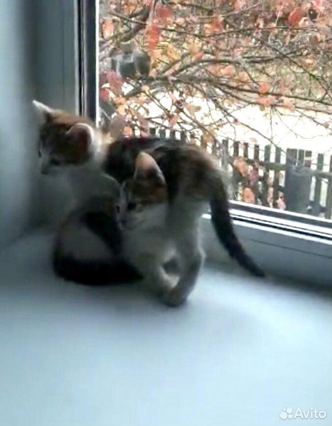 Give kitten in good hands  89379140006 buy 10