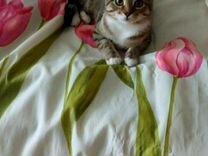 Маленькая кошечка 4-5 месяцев