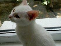 Отдам белого котенка