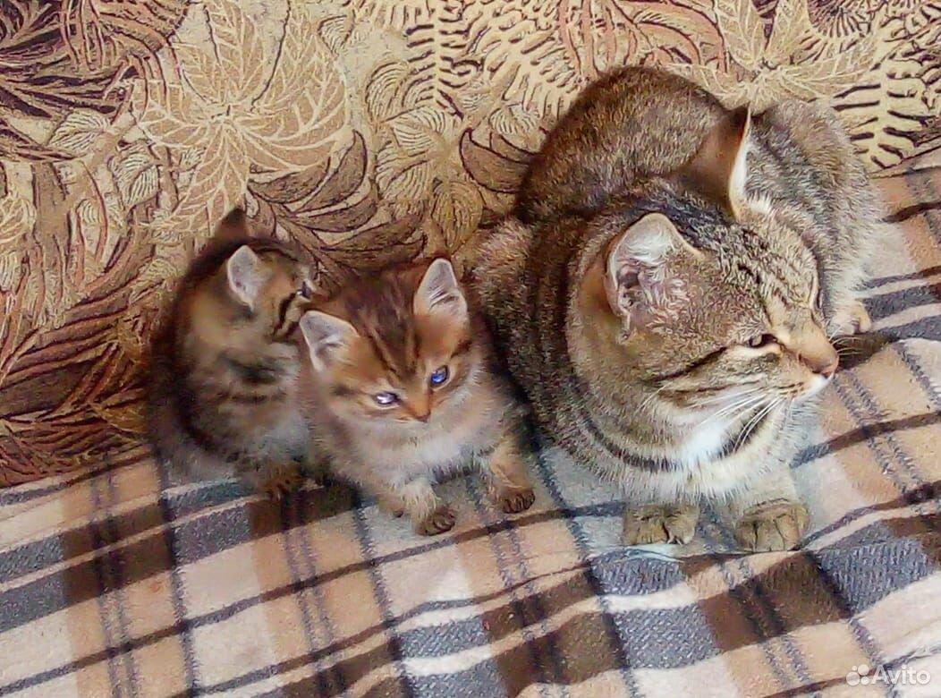 Котята мальчик и девочка  89965001605 купить 1