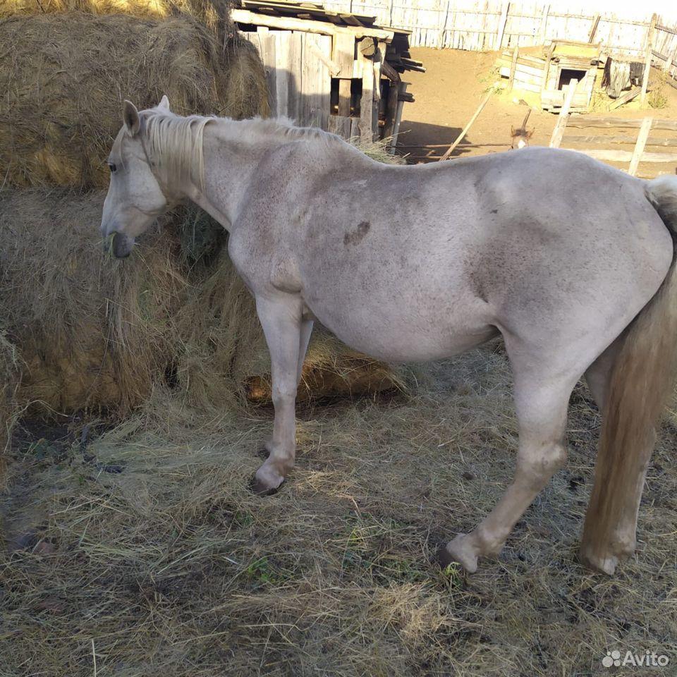 Лошадь  89371640927 купить 2