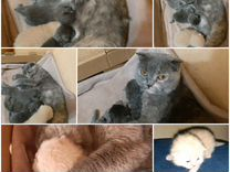 Продаются котята,все голубого окраса.2 девочки.2 м