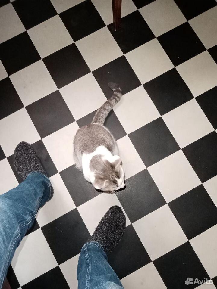 Отдам кота в хорошие руки, кострирован, к лотку пр  89042274202 купить 1