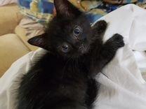 Домашний черный котенок